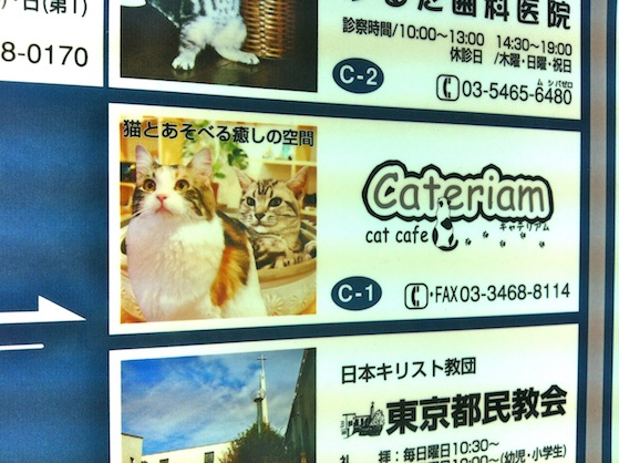Shimokitazana Cat Cafe 3 Mollie Makes, Japan and me (and tales of a cat cafe!)
