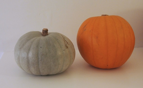P1010173 A teeny bit Halloweeny (pocket sized pumpkins and a sea green squash)