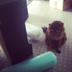 foxowlcat vs bubble wrap - conversation pieces blog