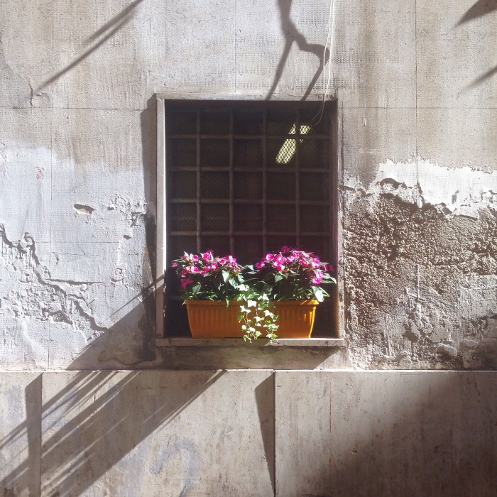 Colourful window box in Rome