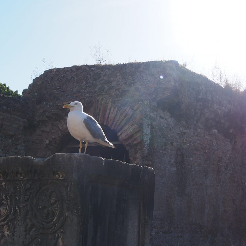 Seagull perched on ruins in Rome, Italy
