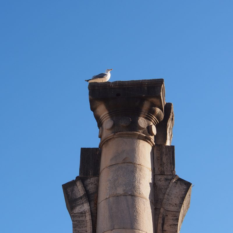 Seagull standing on a pillar in Rome, Italy
