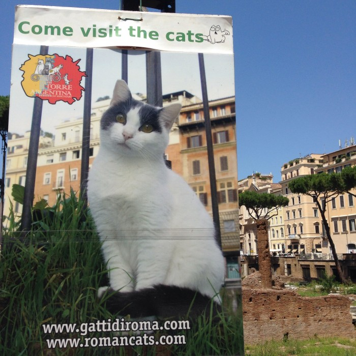Shelter cat sign at Torre Argentina in Rome, Italy