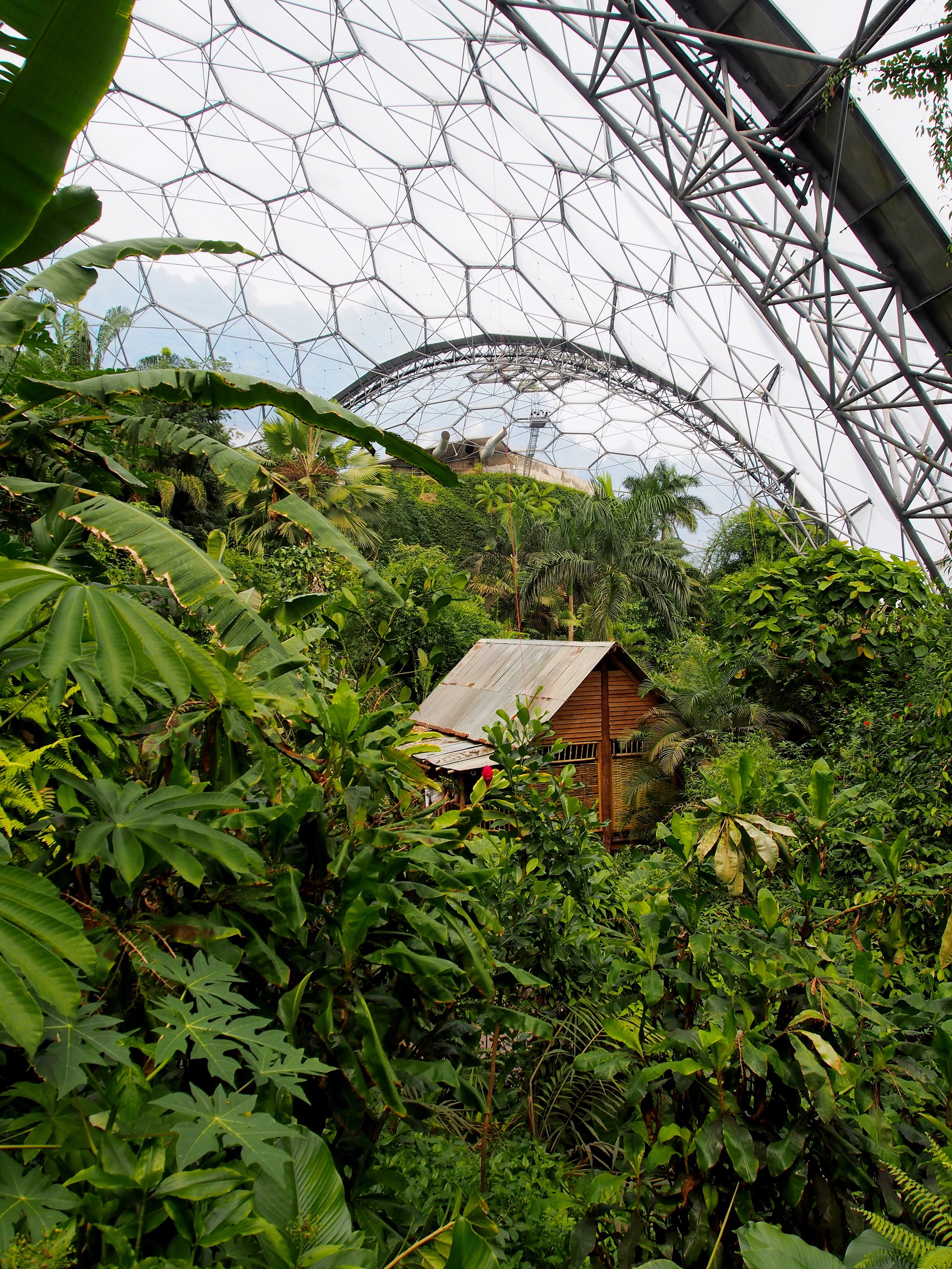 A little piece of paradise inside the Eden Project in Cornwall| Conversation Pieces